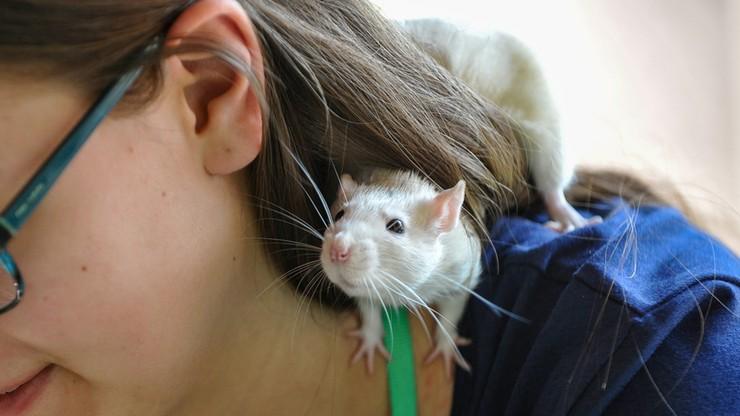 XXI Wystawa Szczurów Rodowodowych