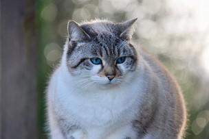 """""""Kocia"""" bakteria może leczyć. """"Potencjał tego gatunku jest ekstremalny"""""""
