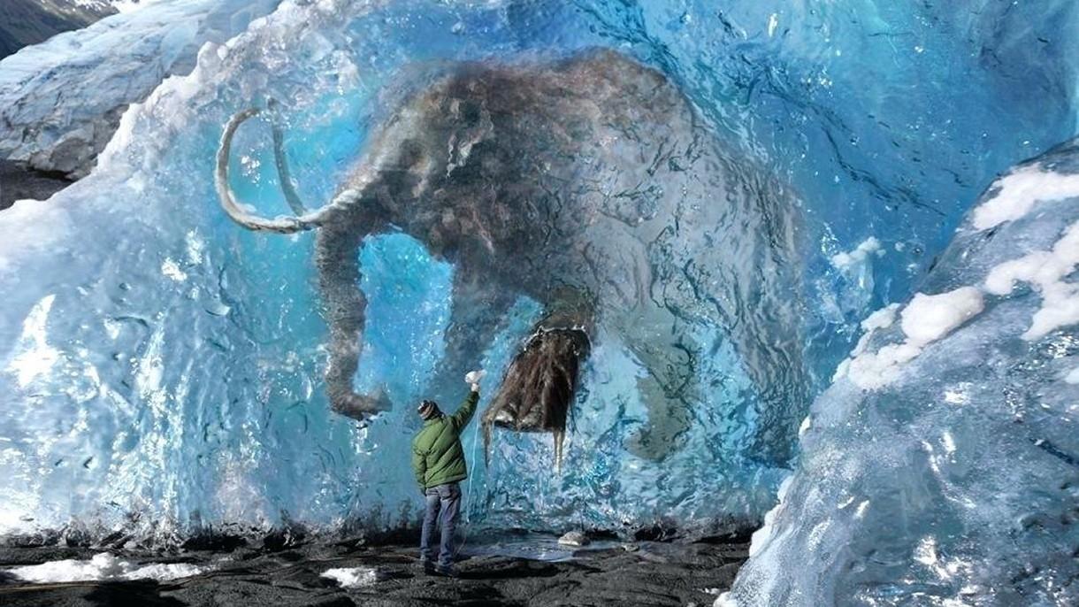 Pierwszy mamut pojawi się w Parku Plejstoceńskim na Syberii już za 6 lat