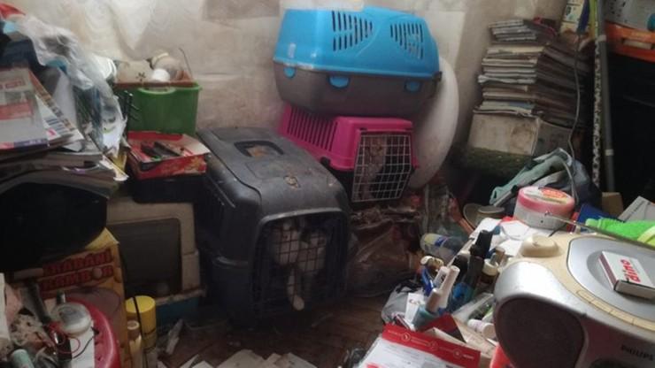 Trzymał w mieszkaniu ok. 20 kotów i psa. Sąsiedzi nie wytrzymali fetoru