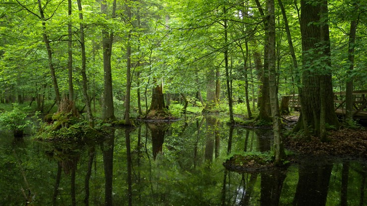 UNESCO oceni stan Puszczy Białowieskiej