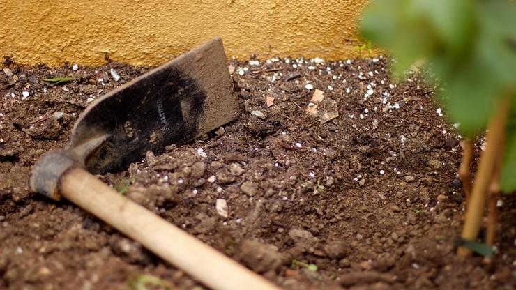 Nietypowa kara dla niezdyscyplinowanych uczniów. Metodą wychowawczą... kopanie w ogródku