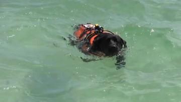 13-latek z Polski uratowany przed utonięciem. W morzu odnalazł go pies