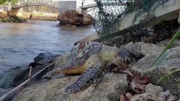 Zginęły żółwie morskie, delfiny i wieloryby. Rosyjski kapitan przed sądem