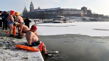 W Krakowie ponad dwudziestu morsów pływało w Wiśle
