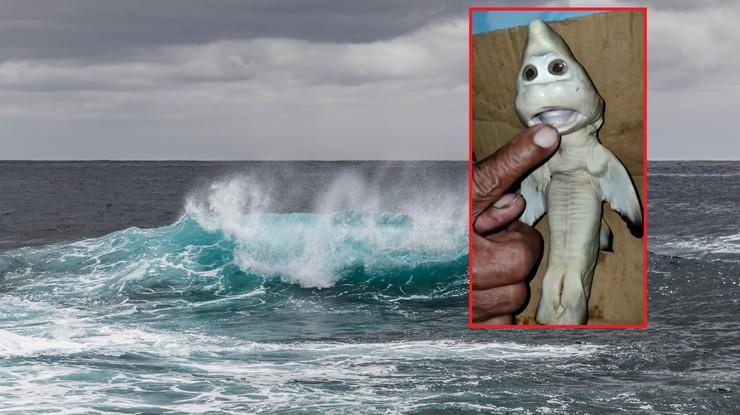 """Indonezja. Rybak złowił rekina """"z ludzką twarzą"""". """"Przyniesie mi szczęście"""""""