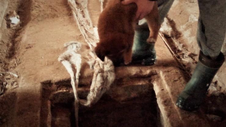"""Ktoś wrzucił szczeniaki do kanału ściekowego. """"Przeraźliwie płakały"""""""