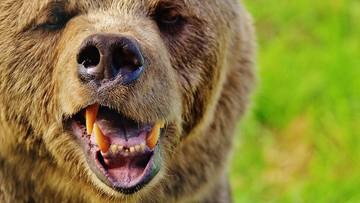 Walczył z niedźwiedziem. Znajomość karate uratowała mu życie