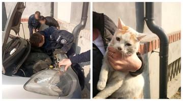 Kotka utknęła pod maską samochodu. Na pomoc przybyli policjanci