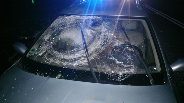 Kierowca potrącił łosia. Zwierzę wpadło na szybę auta jadącego z naprzeciwka