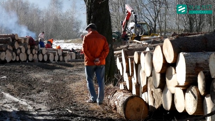 Wycinka starych drzew w Parku Krajobrazowym. Radny poruszony, nadleśnictwo odpowiada