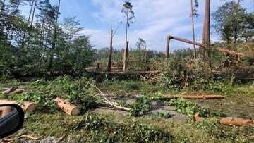 """Setki powalonych drzew w Borach Tucholskich. """"Bardzo duże straty"""""""