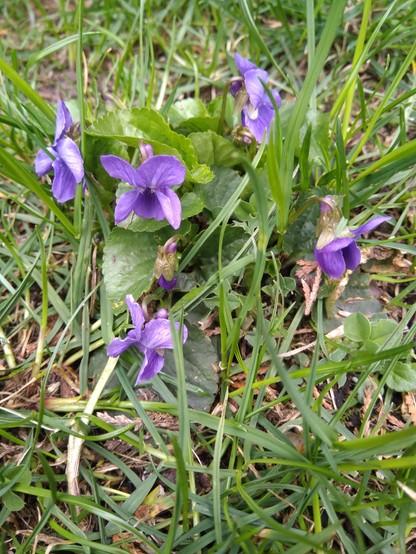 Pierwszy dzień wiosny. Zdjęcia od widzów