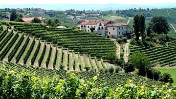 We Włoszech rozpoczęło się winobranie. Szacunkowo tegoroczna produkcja sięgnie 47 mln hektolitrów