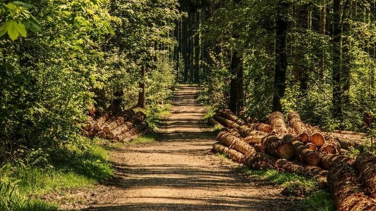 Czy w lesie trzeba mieć maseczkę ochronną?