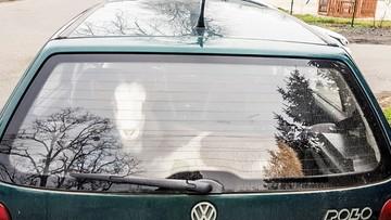 Pijany kierowca, poszukiwany pasażer i... koza w bagażniku