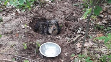 Ktoś zakopał żywego psa