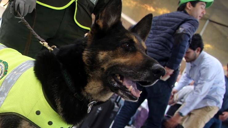 70 tys. dolarów za zabicie psa. Nagrodę wyznaczyli handlarze narkotyków