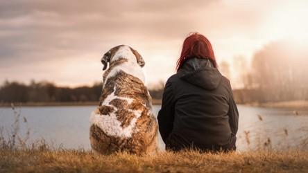 Właściciele zwierząt lepiej radzą sobie z izolacją w czasie pandemii CoVID-19