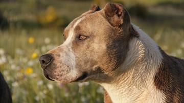 12-latek zmarł po pogryzieniu psa. Właściciel usłyszał zarzut