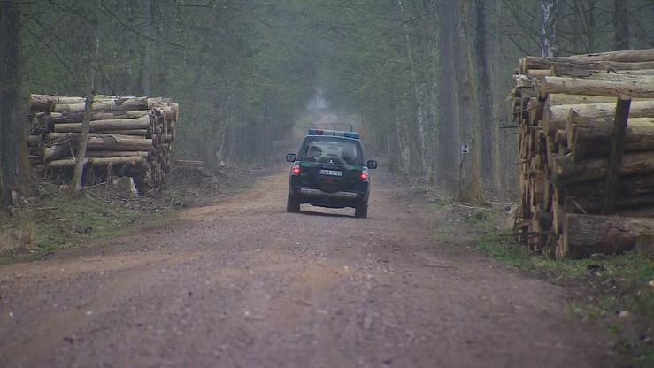 Naukowcy apelują do premiera o objęcie całej Puszczy Białowieskiej parkiem narodowym