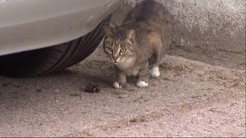 Strzelał do zwierząt. Zabił cztery koty, dwa zranił. Policja szuka sprawcy