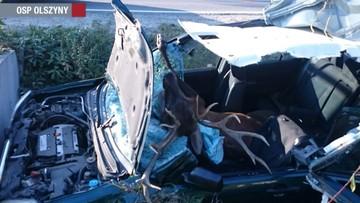 Honda uderzyła w jelenia. Zwierzę wpadło do środka auta