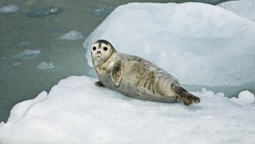 Miliardy plastikowych odpadów w Oceanie Arktycznym. Zwierzęta w niebezpieczeństwie