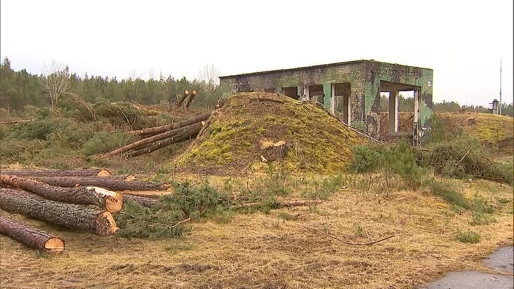 Resort środowiska: wycinka drzew w Łebie była nielegalna