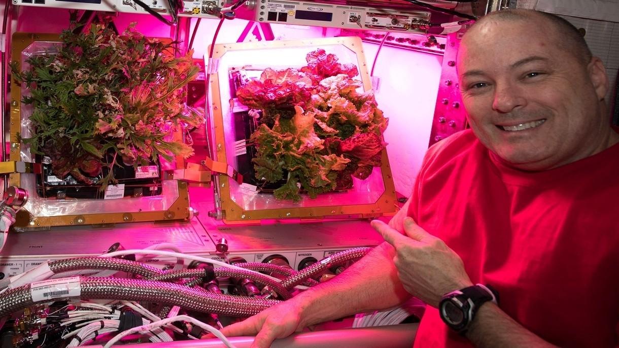 Mamy przełom w hodowaniu warzyw w kosmosie. Zielenina jest smaczna i odżywcza