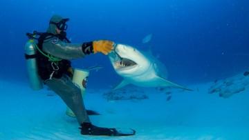 """Nie będzie """"ataków rekinów"""". Będą """"negatywne spotkania"""""""