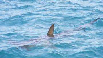 Rekin zabił czeskiego turystę w egipskim kurorcie. Morze wyrzuciło fragmenty ciała