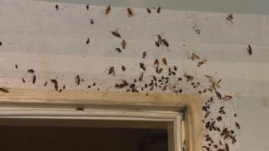 Mieszkania pełne karaluchów. Plaga w Lublińcu
