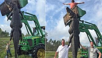 Aligator-gigant zastrzelony na Florydzie. Ważył prawie 400 kilogramów