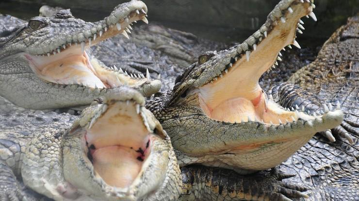 Krokodyle przypilnują więźniów. Bo są nieprzekupne