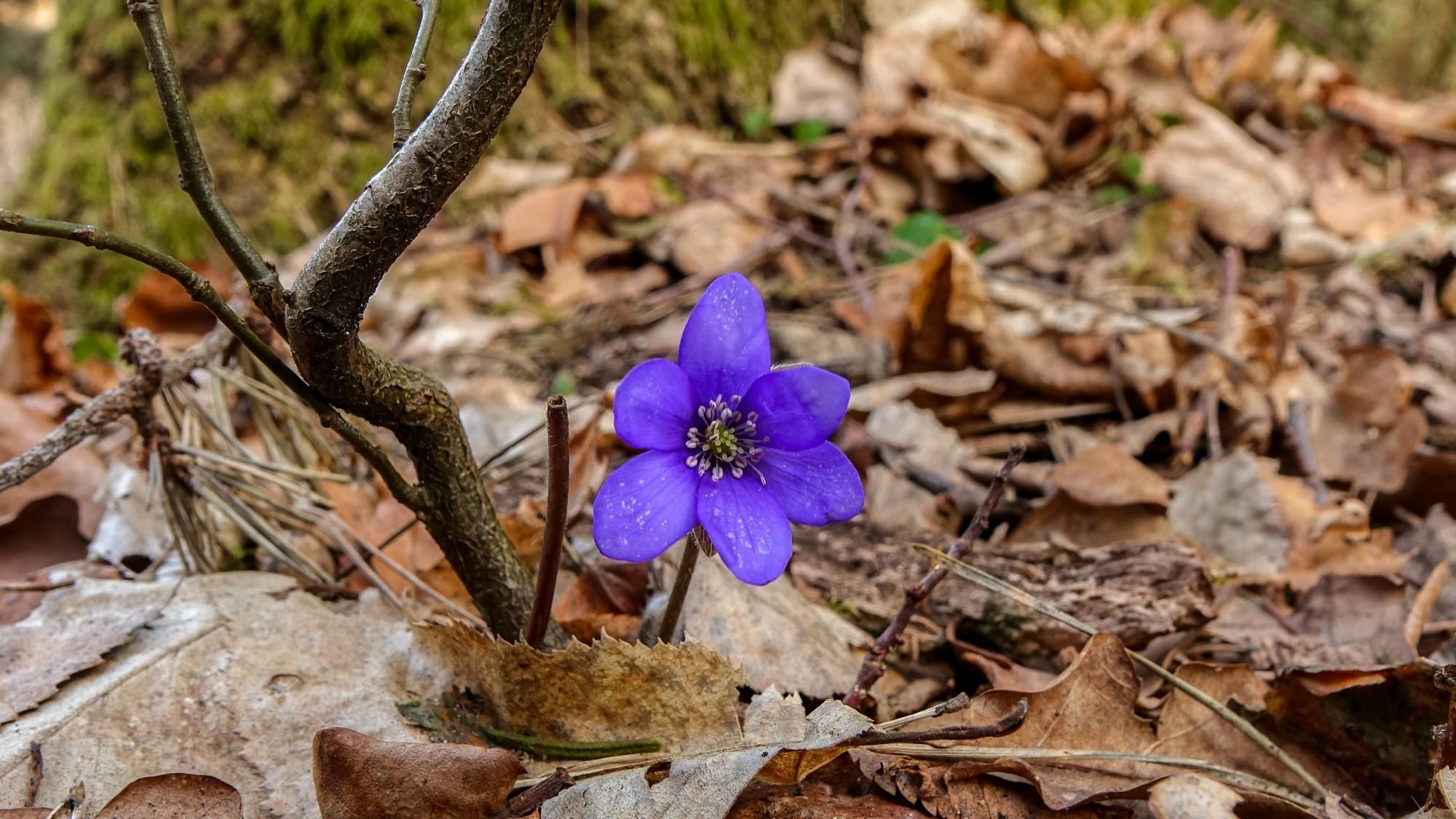 Wiosenna pobudka - zdjęcie 1
