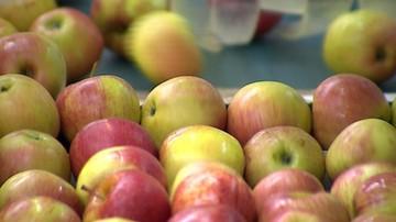 Szwecja: 19 ton polskich jabłek wycofano ze sprzedaży
