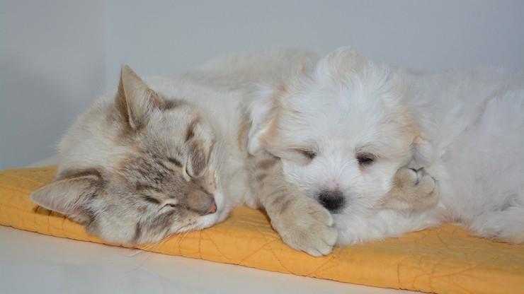 Seul przebada na COVID-19 koty i psy. Jest jeden warunek