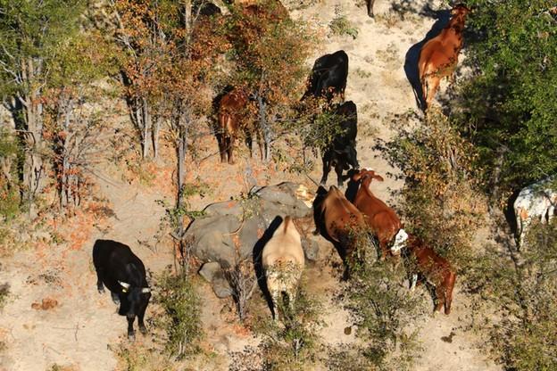 Niewytłumaczona dotąd śmierć zwierząt na niespotykaną skalę zaczęło się w maju