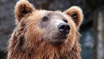 Rumunia. Książę Liechtensteinu zastrzelił największego niedźwiedzia w UE