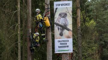 Nieoficjalnie: będzie pozew przeciwko Polsce do Trybunału Sprawiedliwości za wycinkę w Puszczy Białowieskiej