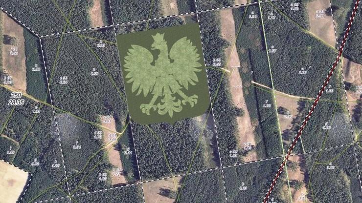Orzeł o szerokości 310 metrów ze 100 tys. drzew. Na Pomorzu zasadzą las w kształcie polskiego godła