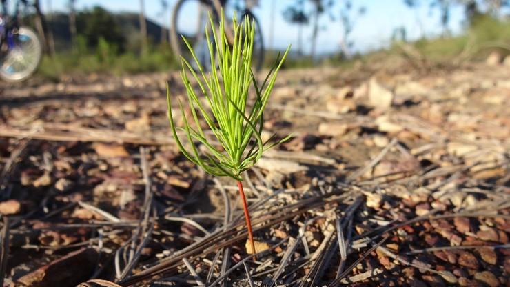 Zasadzą 40 tys. drzew na 800-lecie Mikołowa