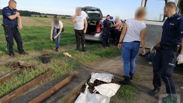 Kradli tory kolejowe. Policja zatrzymała czterech mężczyzn na gorącym uczynku
