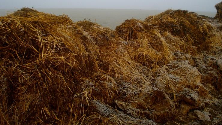 12 ton gnoju - nagroda w konkursie na Białorusi