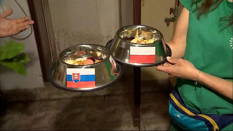 Mecz Polska-Słowacja. Wynik typują papugi z warszawskiego zoo