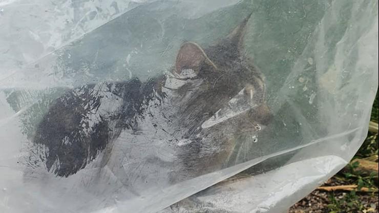 Wielkopolskie. Wsadził karmiącą kotkę do plastikowego worka. Później porzucił na poboczu