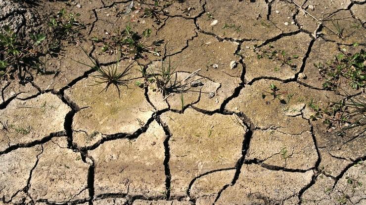 Rekordowa susza w Portugalii. Prognozy nie są korzystne
