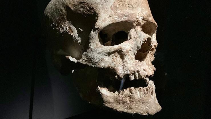 Zbadano DNA najstarszych Europejczyków. Mają zaskakujących przodków