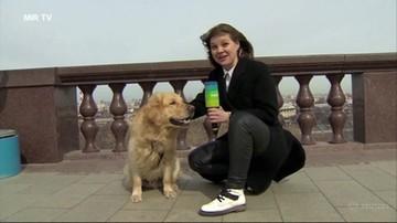 Zabrał jej mikrofon i uciekł. Pies zaatakował dziennikarkę w programie na żywo